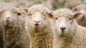 Ne soyez pas un mouton ! Comparez les forfaits et trouvez le meilleur prix sur Meilleurmobile