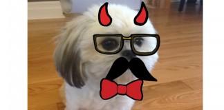 BarkCam : une application qui a du chien