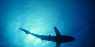 [Insolite] Internet menacé par les requins !