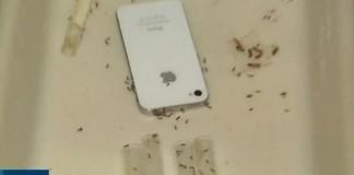 fourmis ondes