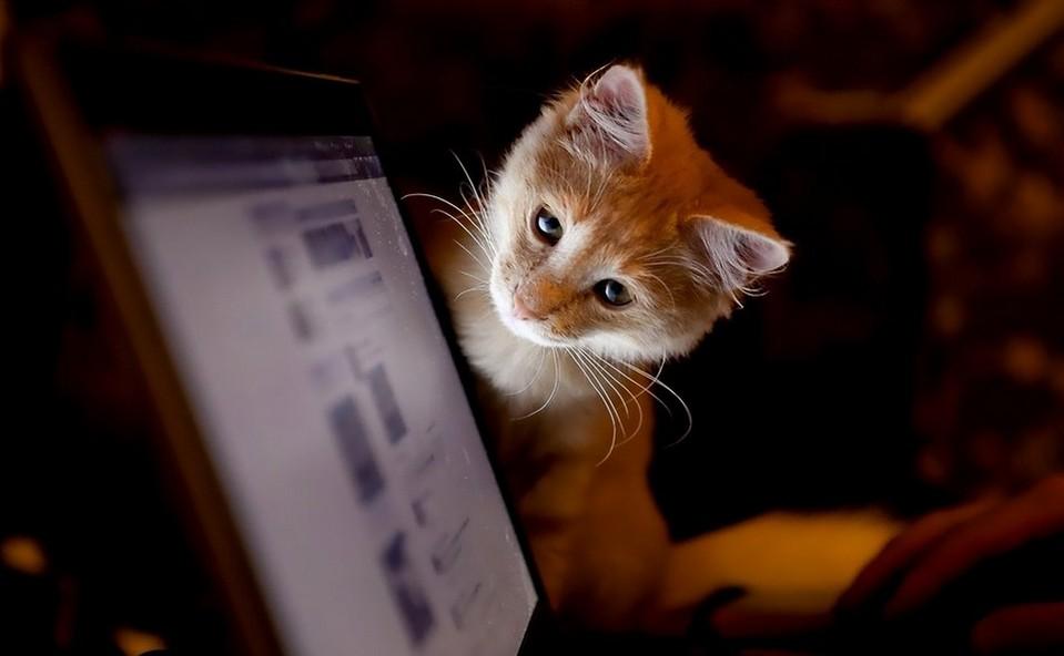 chat ecran