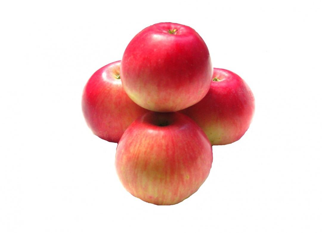 akane pomme