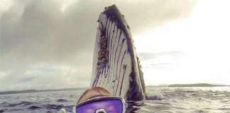 Wilson et sa baleine