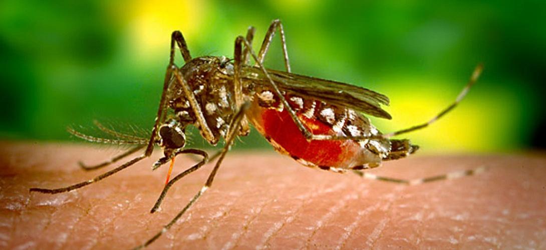 Il écrase un moustique et le prend en photo : Twitter le bannit !