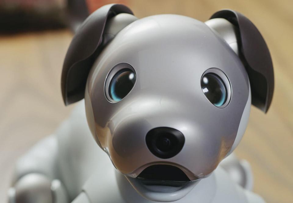 Sony: le chien robot Aibo de nouveau disponible aux États-Unis