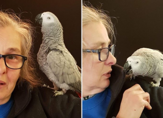Rocco, le perroquet qui parle à Amazon Alexa