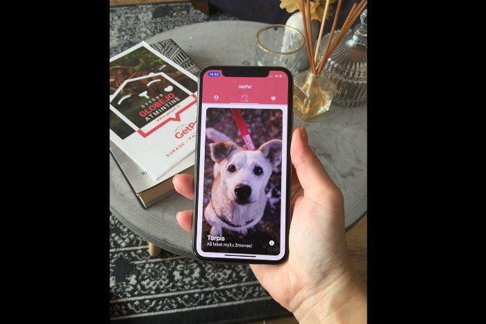 Insolite : ce Tinder permet aux chiens de trouver une famille