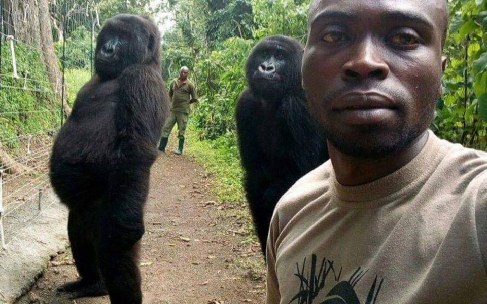Un garde forestier se prend un selfie avec deux gorilles et la photo fait le tour du monde